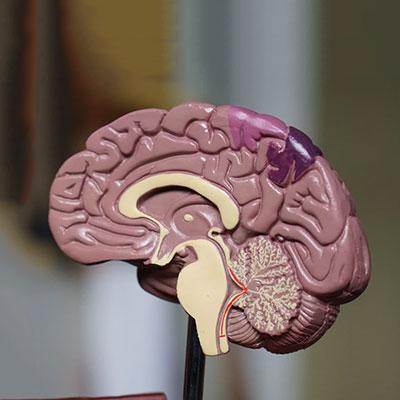 Brainpower Nootropics